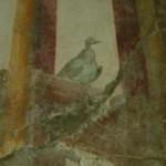 Oplontis la villa de Poppée couloir oiseaux3
