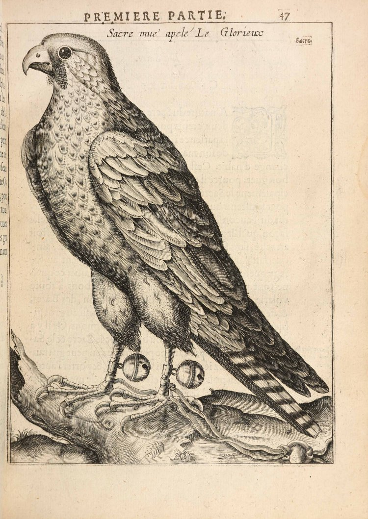 arcussia-charles-d-la-fauconnerie-avec-les-portraicts-au-naturel-de-tous-les-oyseaux-paris-jean-houze-1621--6
