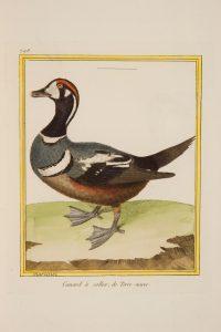 -buffon-georges-louis-leclerc-de-et-francois-nicolas-martinet-histoire-naturelle-des-oiseaux-paris-de-limprimerie-royale-1770-1786--10
